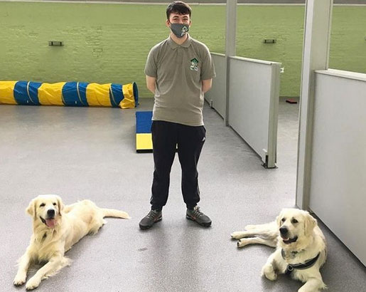 Dog Guardian Service